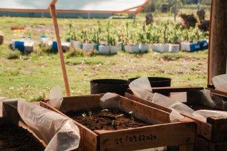 Para reforestar un departamento, Salto Grande desarrolla una red de viveros