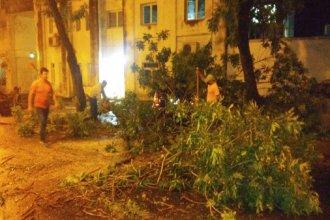 La tormenta provocó inundaciones, caída de árboles y cortes de luz: debieron asistir a varias familias