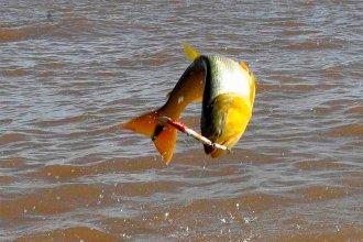 """Denuncian """"invasión"""" de pescadores ilegales argentinos en costas uruguayas"""