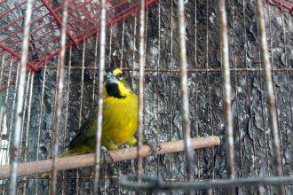 Rescataron más de 80 aves silvestres en un operativo en una vivienda