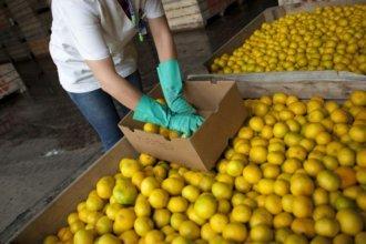 Por no pagar aportes, sindicato expone a una citrícola con el caso de un paciente oncológico