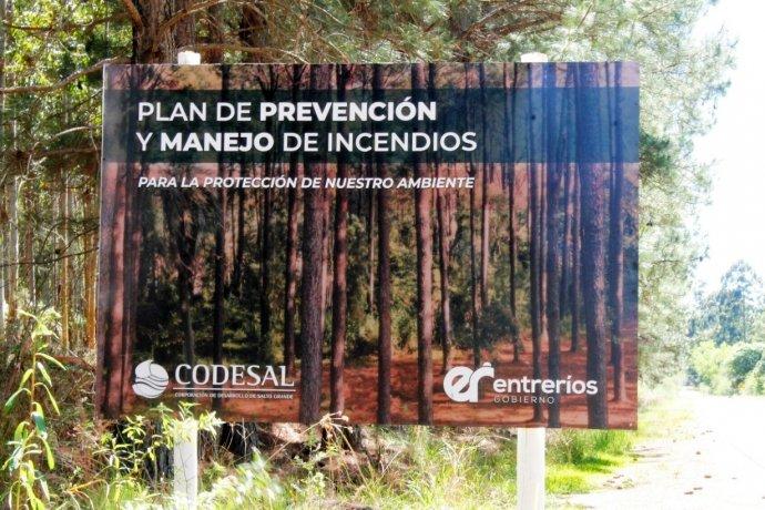 CODESAL dice que la tala de árboles es parte de un plan de prevención de incendios y anticipa qué hará con la madera