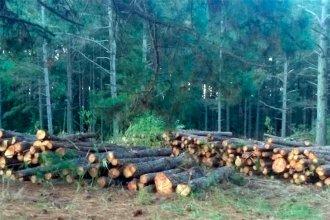 Mazurier arremetió contra el Diputado Ángel Giano por tala de árboles en el Perilago