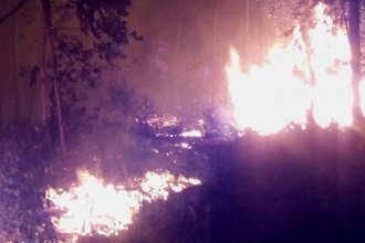 Tras un duro combate de más de 6 horas, bomberos lograron extinguir el fuego en una plantación de eucaliptos