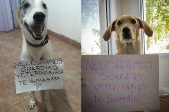 Una campaña moviliza en las redes a dueños de animales domésticos y proteccionistas