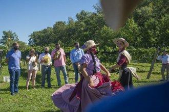 """Después de 100 años, ciudad entrerriana vuelve a la actividad vitivinícola: """"Hicimos la primera de muchas cosechas"""""""