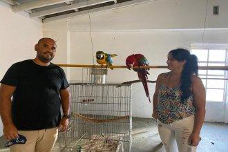 Tras la polémica, los guacamayos volvieron con la familia que los reclamaba