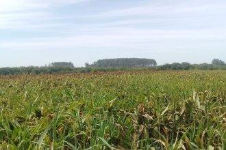 Fumigación peligrosa: denuncian aplicación de agroquímicos sobre un campo en el que desarrollan actividades educativas