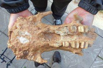 Científico entrerriano participó en el hallazgo del megaterio más antiguo del país