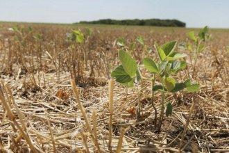 La Federación Agraria insiste en la declaración de emergencia por la sequía en el sur entrerriano