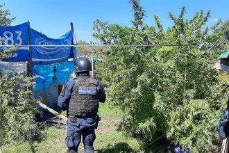 La Policía allanó una vivienda e incautó 21 kilos en plantas de marihuana