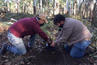Codesal comenzó a relocalizar especies nativas para conservar el perilago