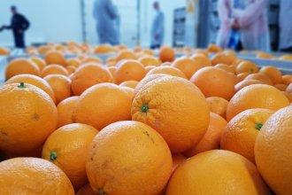 Después de nueve meses, Argentina volverá a exportar cítricos a Europa