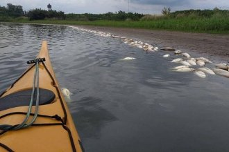 Exigen información sobre la mortandad de peces en un arroyo que desemboca en el río Uruguay