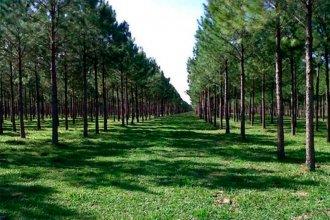 Cuidar los árboles: ¿Nuevo negocio?