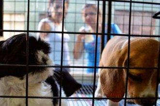 """No más animales en vidrieras: legislador propone percibirlos como """"seres sintientes"""" y prohibir su exhibición"""