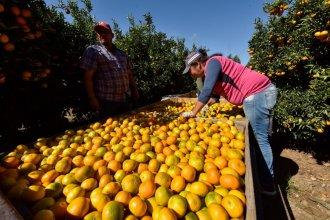 Extienden los beneficios de la emergencia citrícola: el trámite que deben hacer productores en la AFIP