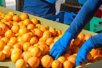 Gestionan mejoras para ampliar los mercados internacionales del Citrus