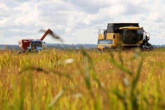 Con protagonismo entrerriano, finalizó la mejor cosecha de arroz de los últimos años