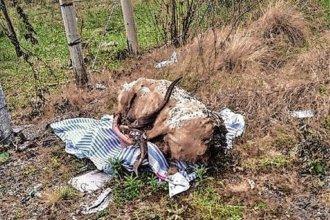 """Ritual en el cementerio de La Criolla: encontraron """"un carnero con guampas muy grandes"""""""