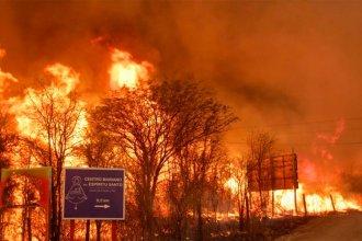 El mundo forestal en llamas