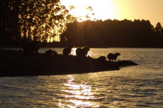 ¿Cómo conservar el lago de Salto Grande, de manera sustentable?