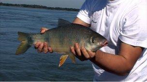 Concordia vivirá su XXV Fiesta Nacional de la Pesca de la Boga