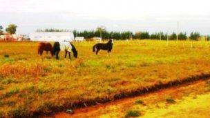 Inspectores amenazados por los dueños de caballos sueltos