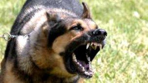 Lo atacaron entre 5 perros