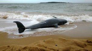 Apareció muerta en Punta del Este