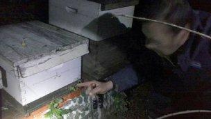 Recuperaron 53 colmenas valuadas en 250.000 pesos