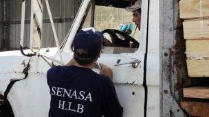 El Senasa detectó 3 casos positivos de HLB en Formosa y Chaco