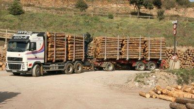 Entre Ríos busca exportar madera al Uruguay