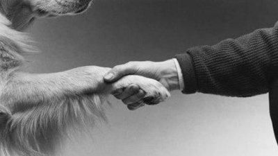 Caminata contra el maltrato animal
