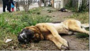 Matanza de perros en la zona norte
