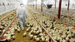 Bioseguridad en Granjas Avícolas