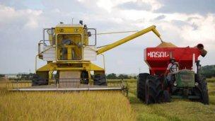 Productores de arroz recibieron facturas de luz de hasta 300.000 pesos
