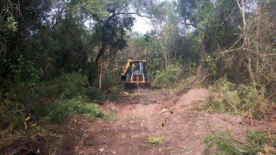 Confirman multa de un millón de pesos por talar bosque nativo