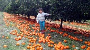 Exportación de citrus: En 10 años cayó entre 140 y 165%