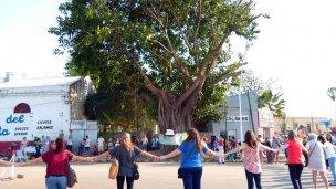 Ficus: Un abrazo a la vida y a la historia