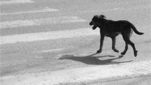Cuidado perro suelto...