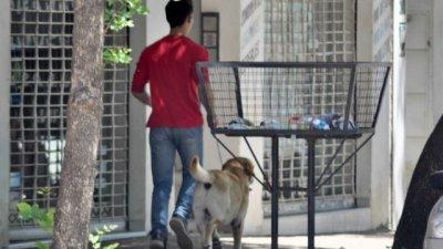 Pedirán que investiguen presuntos casos de envenenamiento de mascotas