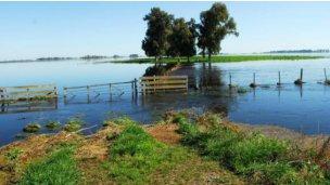 Formularios de declaraciones juradas por la emergencia agropecuaria