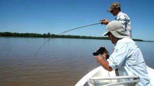 Vedaron la pesca de una especie insignia