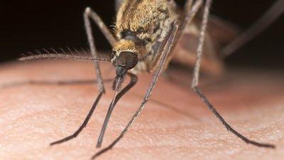 Entrerriana contrajo dengue cuando vacacionaba en Brasil