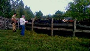 Recuperaron bovinos en San Pedro