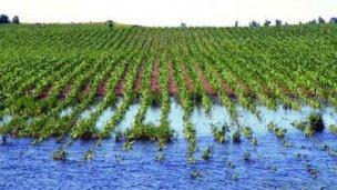 Estiman que sojeros perdieron más de $5 mil millones