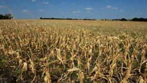 La falta de lluvias pone en jaque a la producción entrerriana