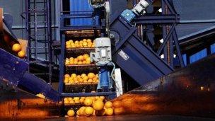Villa del Rosario fabricó su primer jugo de mandarinas