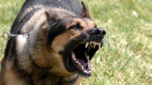 Ataques caninos: identificarán a cada perro con una cédula